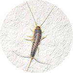 Silver-Fish-Pest-Control-London