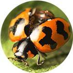 ladybird-ccs-london-pest